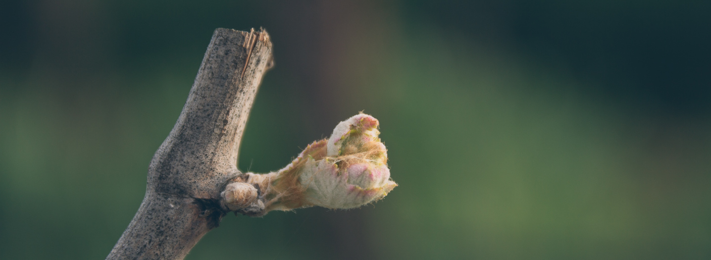 single budbreak
